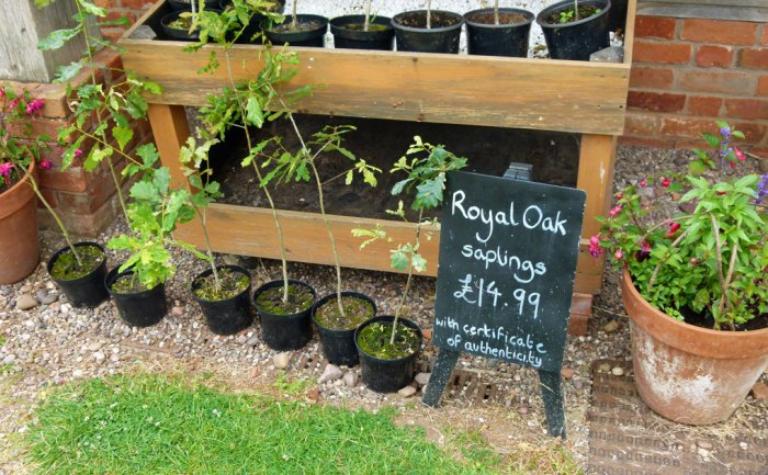 Buy a genuine Royal Oak sapling. You thought I was joking, didn't you?