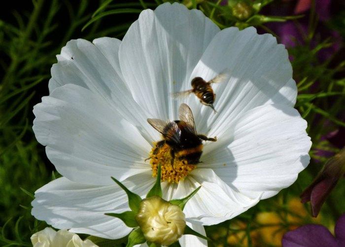 Flower, Harlow Carr