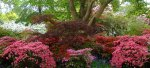 Rhododendrons, azaleas, south-east, England, Gardens