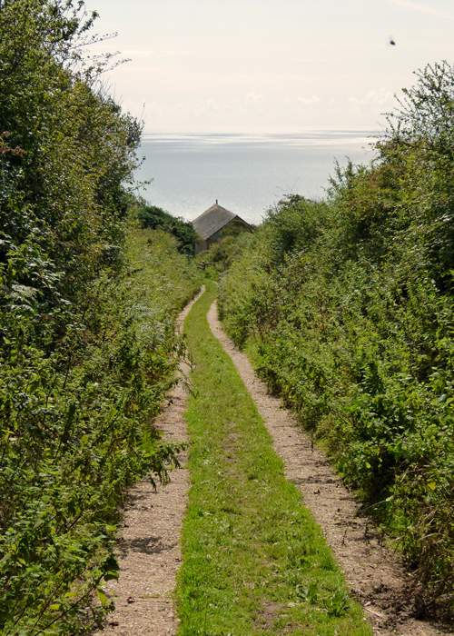 Path to Golden Cap, wildlife, Dorset, coast