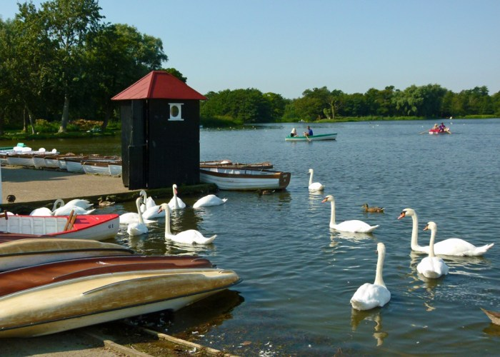 Swans, birds, Thorpeness, meare, visit Suffolk