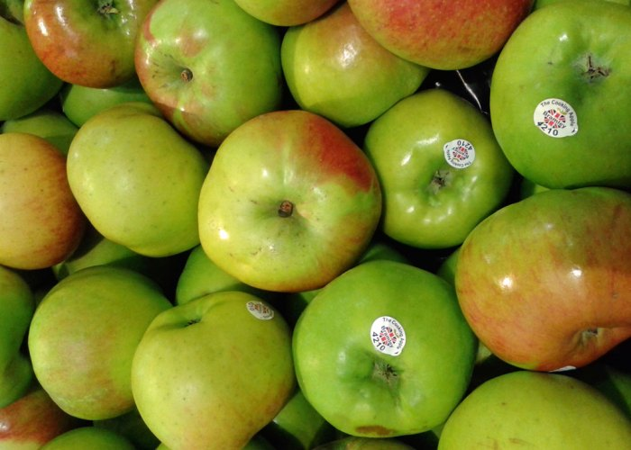 Bramley Apples, cooking apples, Southwell, Notts