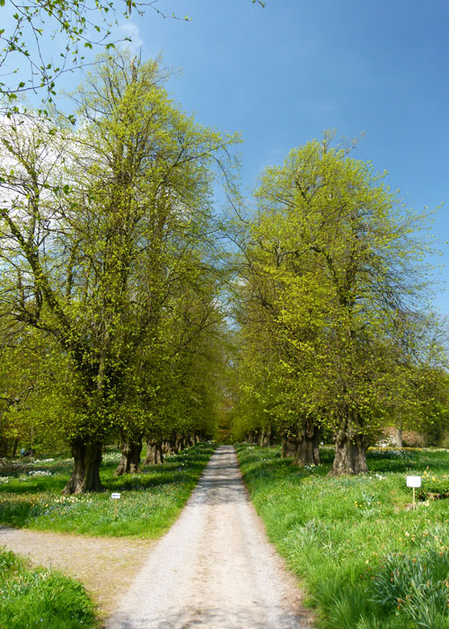 Lime Avenue, Constable Burton