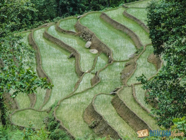 trekking-sapa-vietnam-8