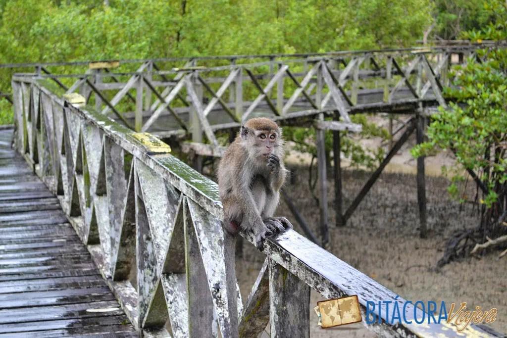 Parque Nacional Bako - Borneo Malasia (19)