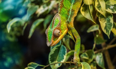 Conservation in Madagascar