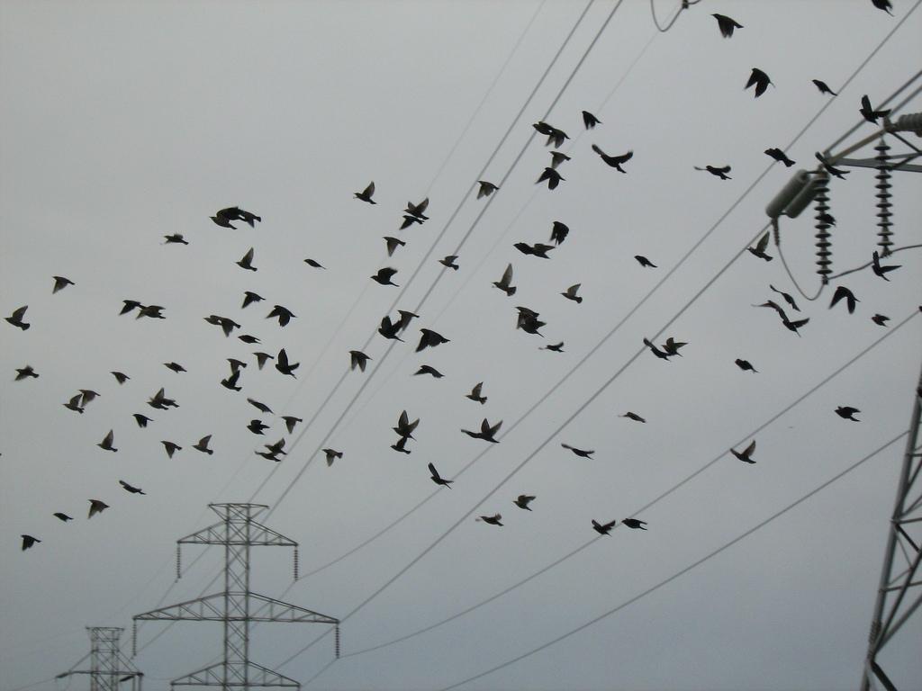 fm5_Melissa_Gutierrez_Birds