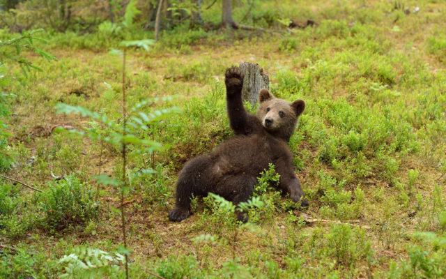 shutterstock_220358014-640x400 Bakkt Launch Next Month May Not End Bear Market