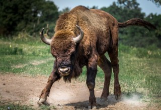 $12,000 Attack Underway as Bitcoin Bulls Push Forth