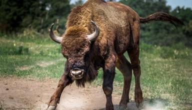 $12,000 Attack Underway as Bitcoin Bulls Push Forth
