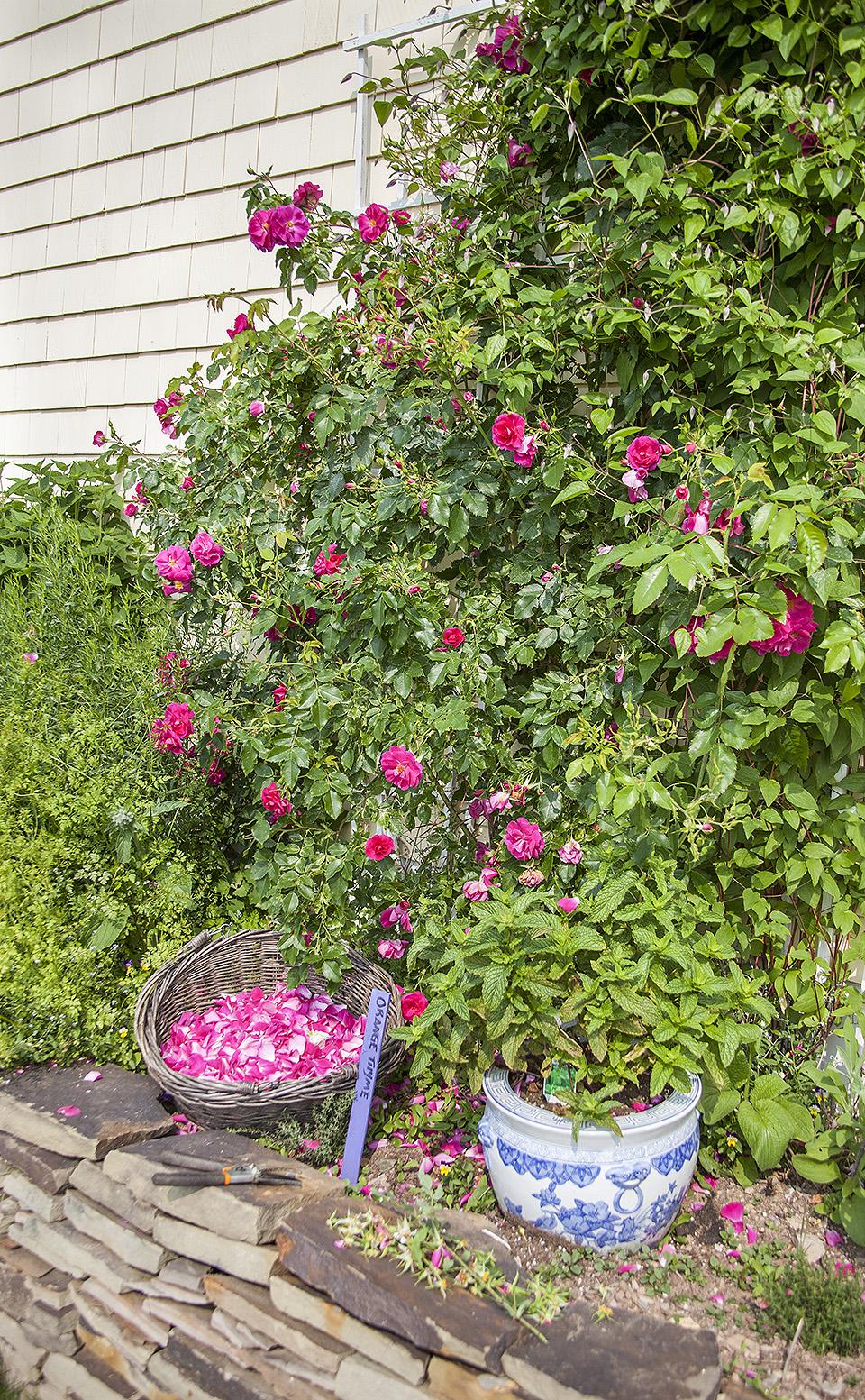 rose petal tea - bitebymichelle.com