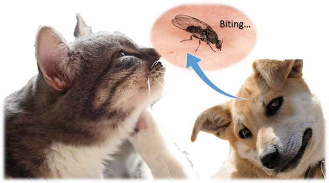 A puppy and a cat suffering from a biting gnat