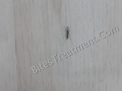 Real Size view of a lake fly on floor looks like a mosquito