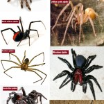 List of most dangerous spiders live in the today's world