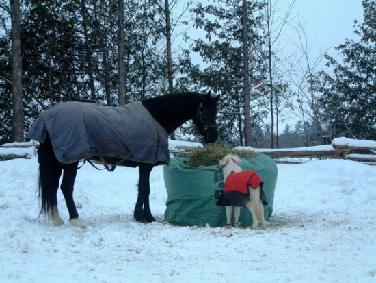 Big Bale Buddy is ideal in the snow