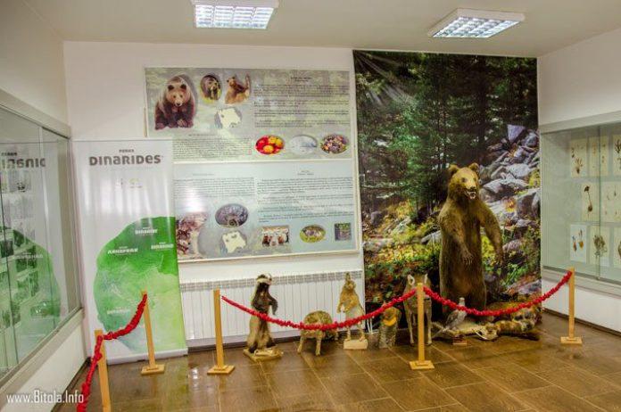 pelister info center - exhibition room
