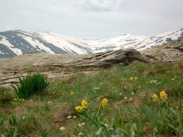 Jorgov Kamen Pelister Hiking Trail