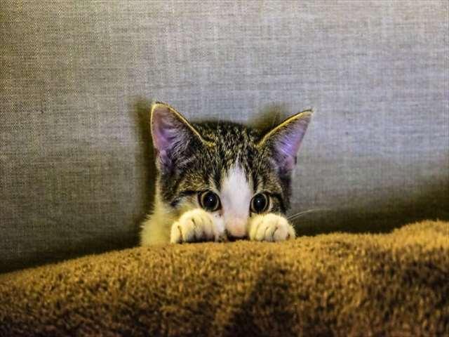 隠れるネコ