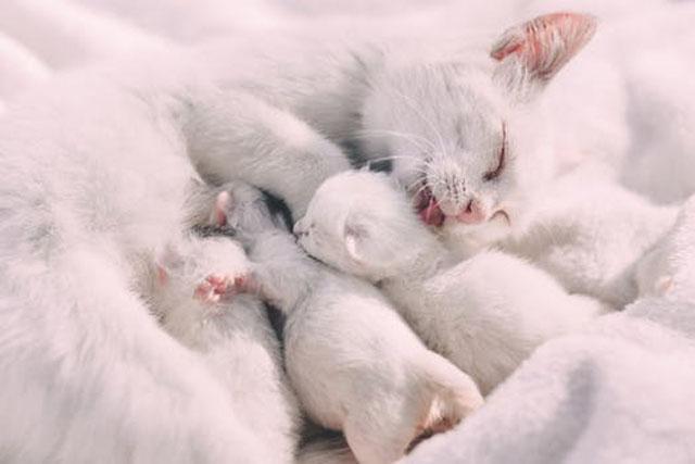 ペットショップ猫