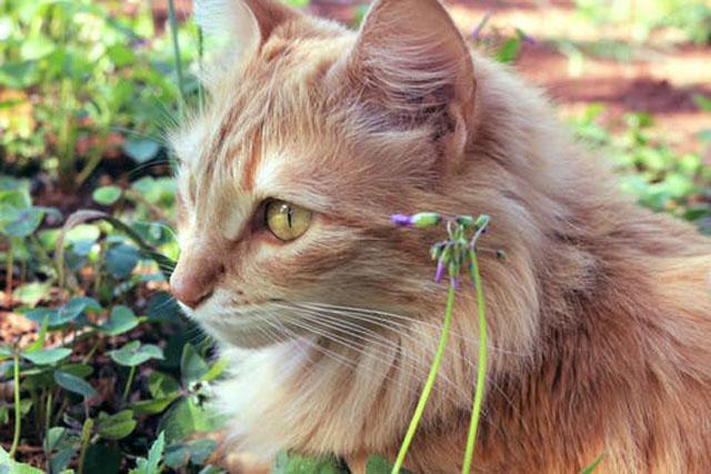 猫は耳がいい
