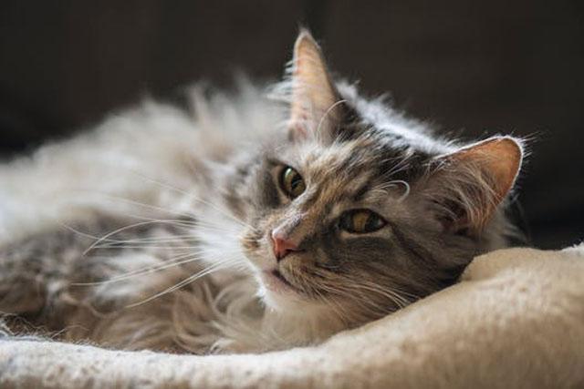 猫の目はくるくる変わる