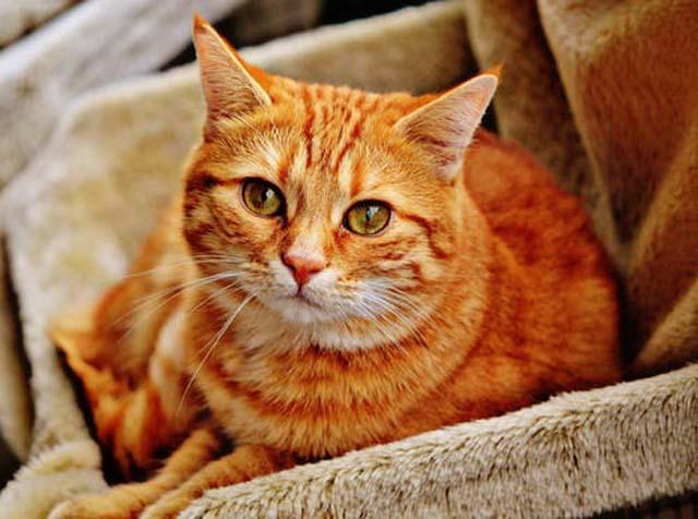 心細い目の猫