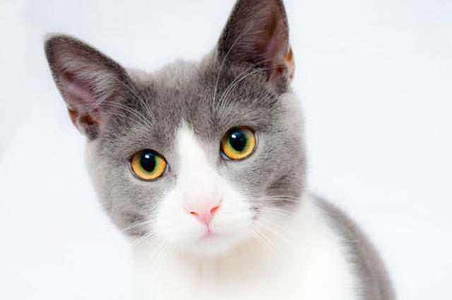 一途に見つめる猫