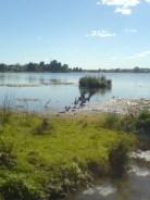 Rotoroa (Hamilton Lake)