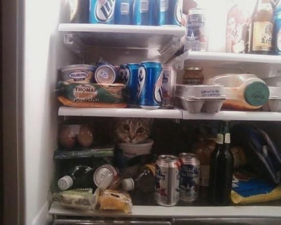 Refrigerator-cat
