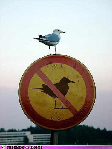 No bird