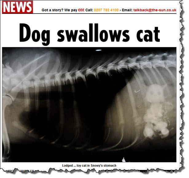 Dog eats cat