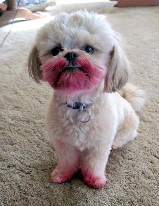 Dog lipstick