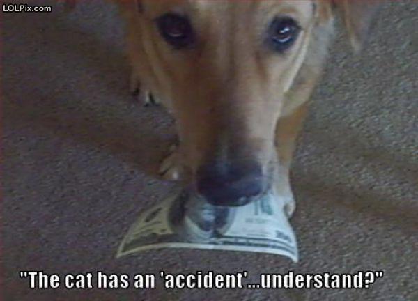 Accidental cat
