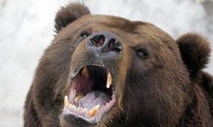 Russian-bear-006