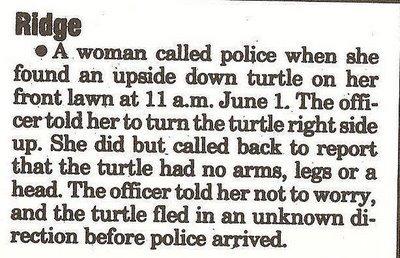 Turtle_bits