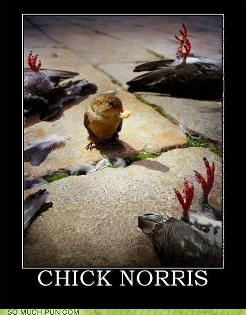 Chick norris
