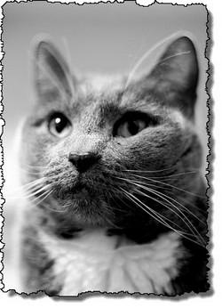 Thinkingcat