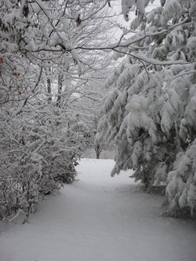 Xmas snow1