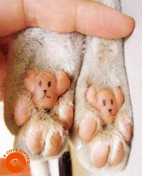 Puppy paws pals