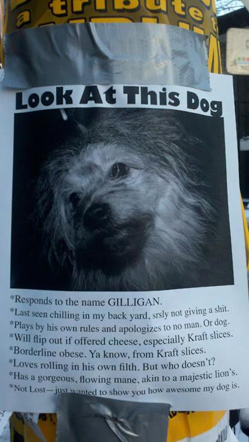 Look-at-this-dog