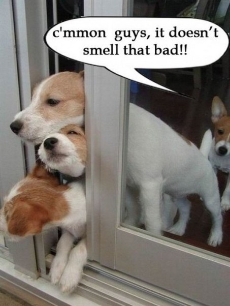 Puppy farts