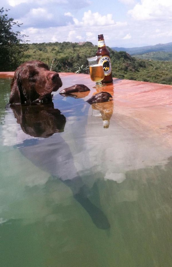 Good dogs life