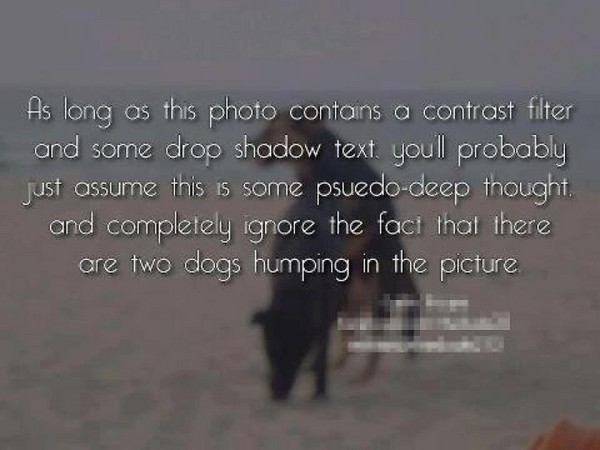 2 dogs humping photo