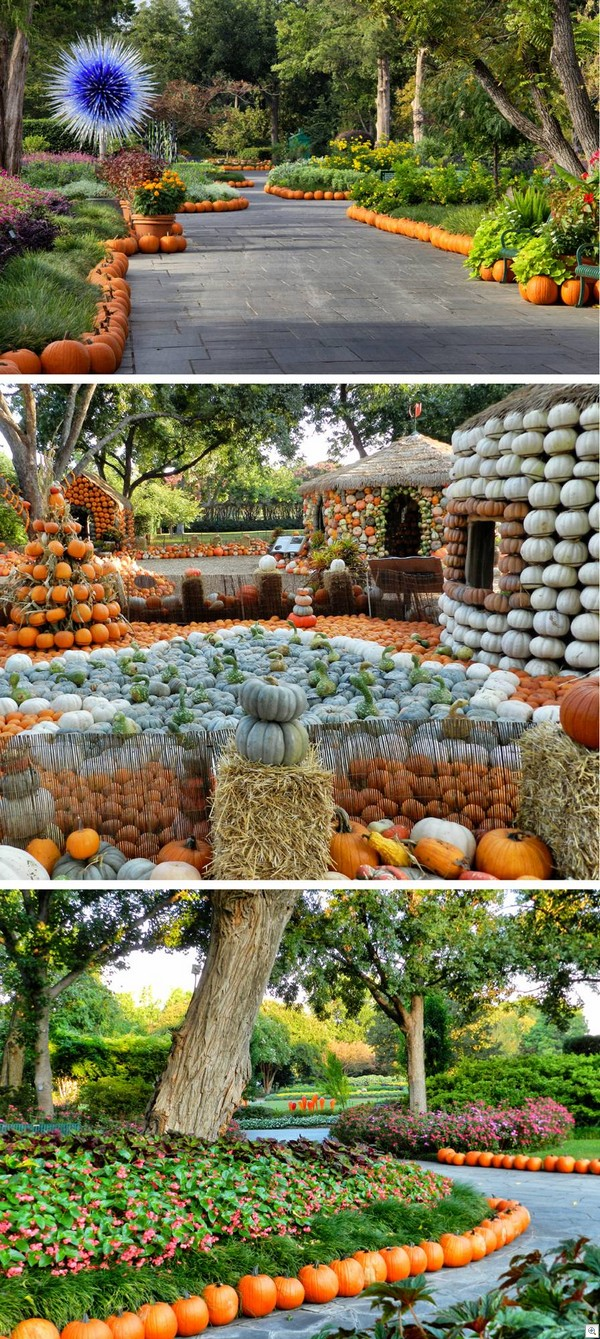 Pumpkin land3