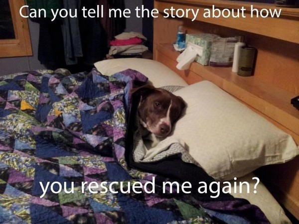 Rescue story