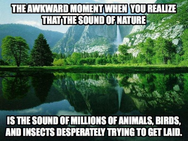 The sound of nature