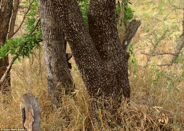 Leopard in photo