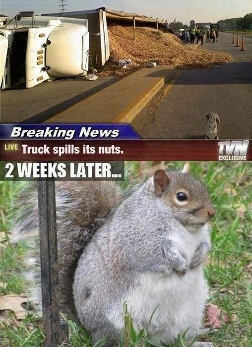 Truck spills nuts