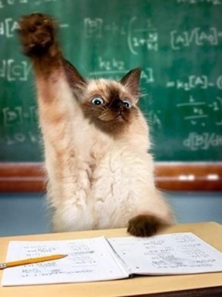 Classroom cat