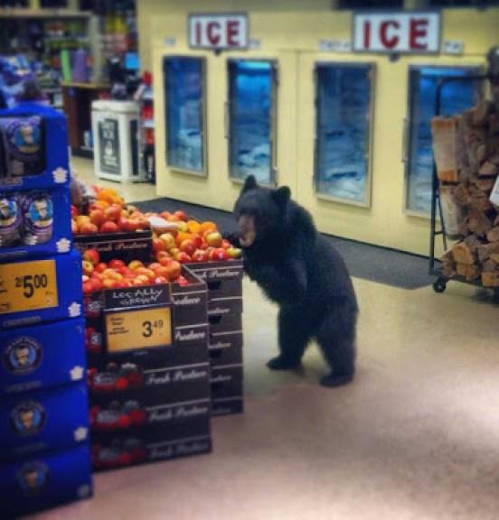 Bear shopping